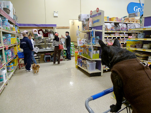 Sharkey, we can inspect the store later!  Let's make friends with some of the other dogs in the store!  Hey you!  How's it going?