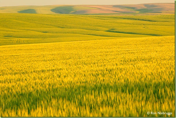 040602-137_wheat fields