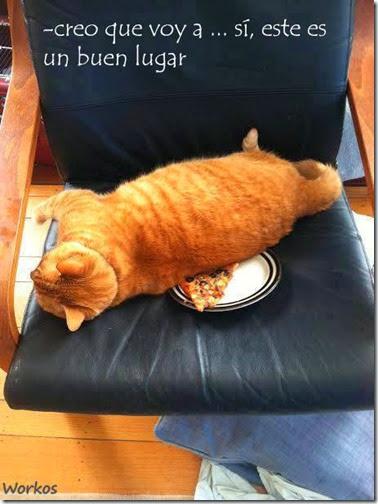 gato siesta