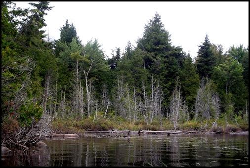 Prong Pond 089