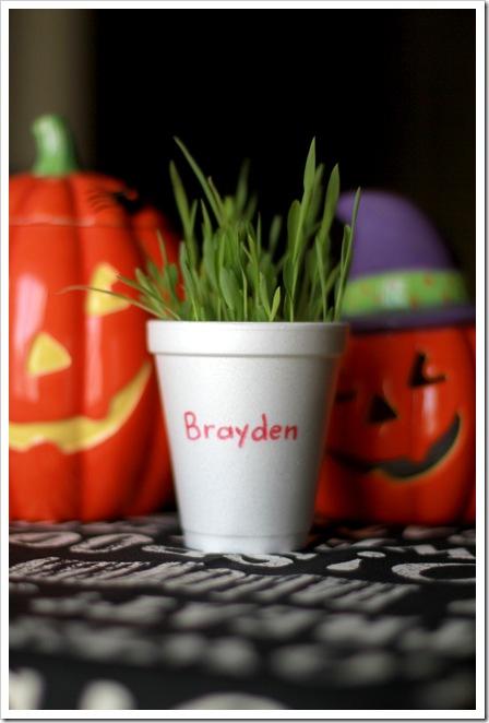 brayden's plant IMG_9571
