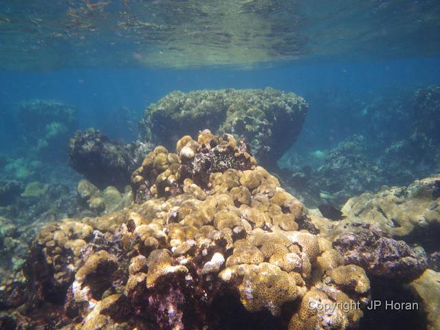 Buck Island Reef - IMGP1268.JPG
