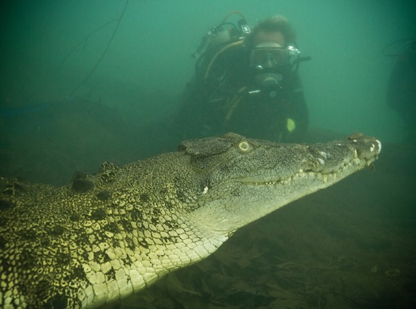 [swimming%2520with%2520crocodile%2520in%2520Nile%255B5%255D.jpg]