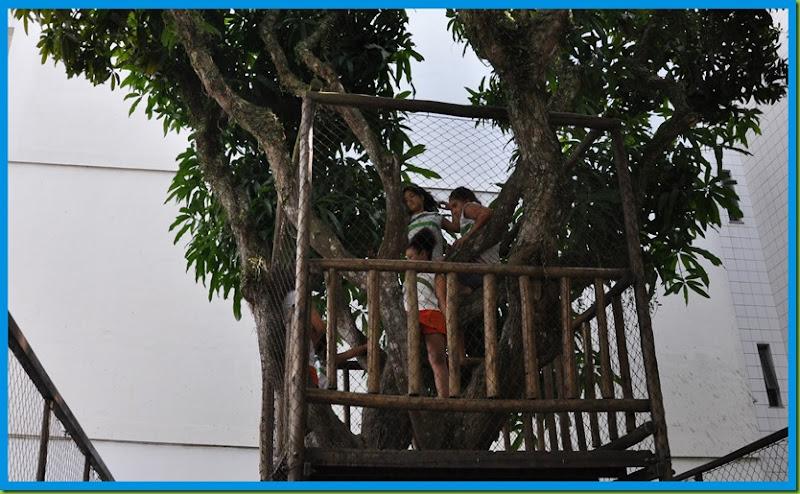 Casa da árvore1