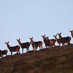 Deer in the quantocks 168.JPG