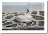 Ele nem se incomodou conosco e continuou dormindo, no meio da rua! Lindo!