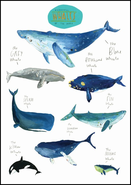 Wonderful Whales of the World