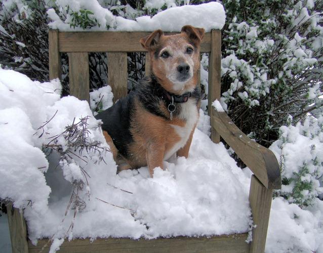 Cachorro na neve.