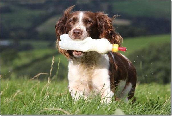 Cachorro alimentando um cordeiro (7)