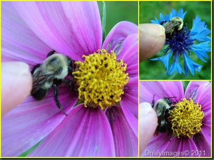bee petting collage