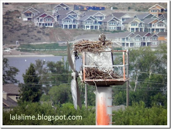 Osprey-Cottages_Barb-Derksen
