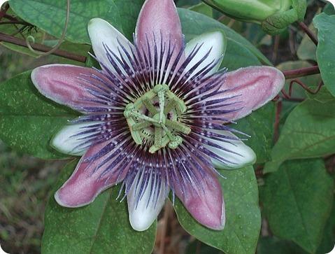 Florida Flower, taken in 2004