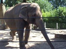 2013.08.04-039 éléphant