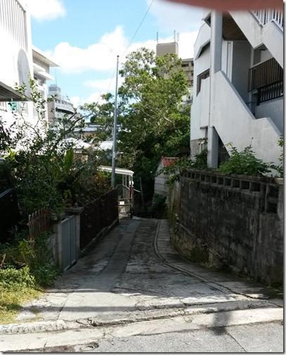Okinawa 058 Monster Carrot