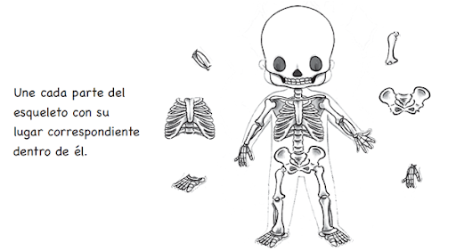 Esqueleto Dibujo Para Armar Dibujos de Esqueletos Para