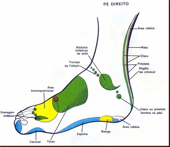 Reflexologia Mapa do Pé Direito Lateral