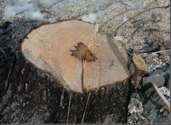 puun kaato telkät 040