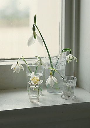 An elegant assemblage of snowdrops in varied glasses reminds me that some of the best arrangements give flowers room to breathe.