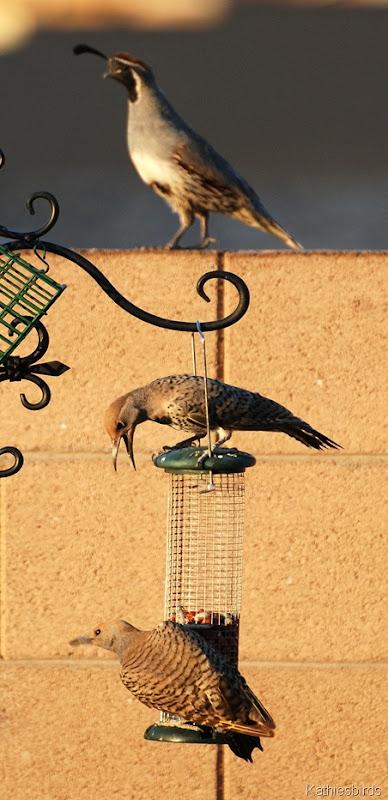 5.  Tucson, AZ 2008