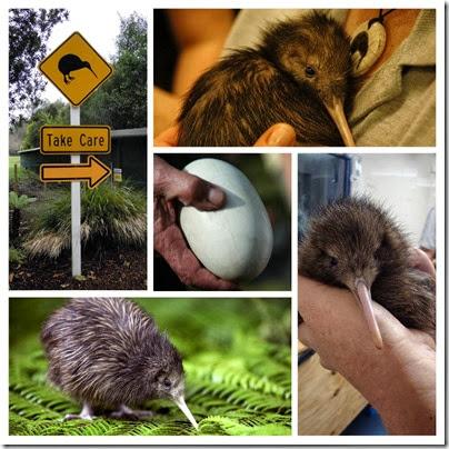week 42 - kiwi