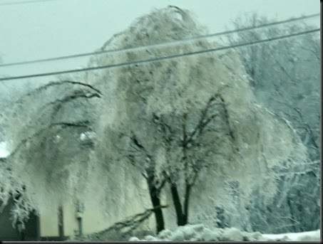 Willow tree ice