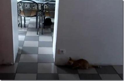 odoroita_cat