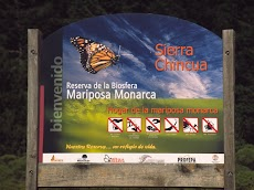 2004 March Mariposa Monarca Michoacan0008.jpg