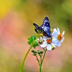 imagens-de-flores-990