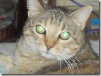 15-year-old-Bobcat