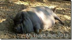 Miss Piggy at the MVP
