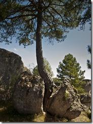 Árbol partiendo una roca enorme