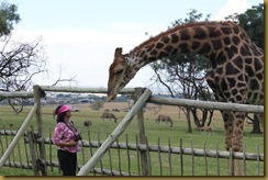 Gita and the giraffe having a conversation