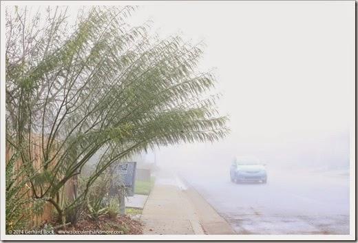 141223_fog_014