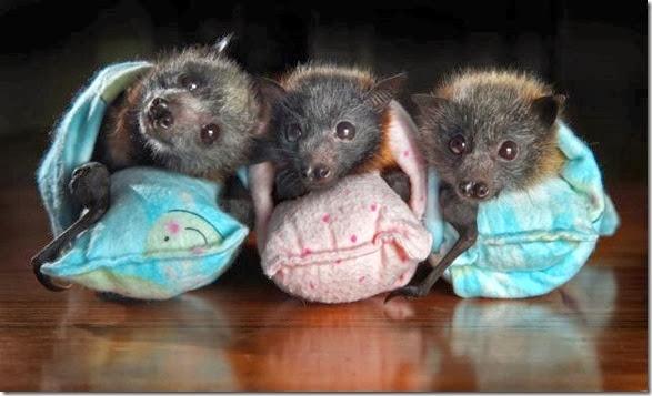 cute-baby-animals-16