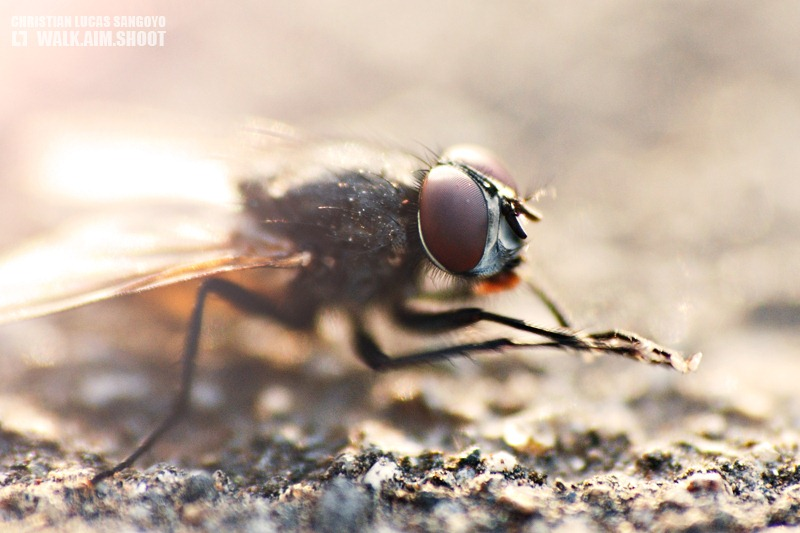 Fly Macro | Strawberry Fields | Benguet, Philippines
