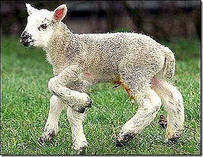 mutasi pada hewan