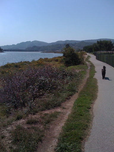 Peach ponders the changing seasons in Sausalito... and when she will get a treat.