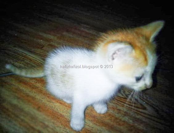 anak kucing warna putih