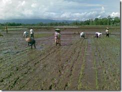 petani-indonesia