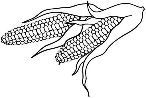 Imagenes de un maiz para colorear - Imagui
