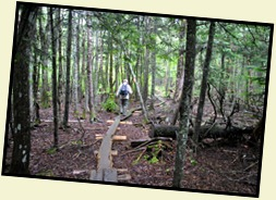 8 - Another Balance Beam Trail