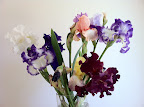 Oct 21 - Mixed Irises