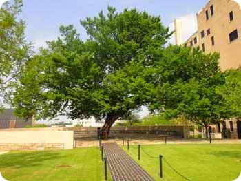 23-tree
