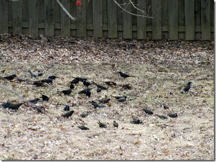Birds03-14-14c
