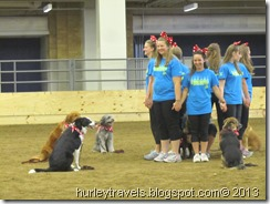 Dog drill team from Boone County shows off.