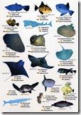 fauna marina V