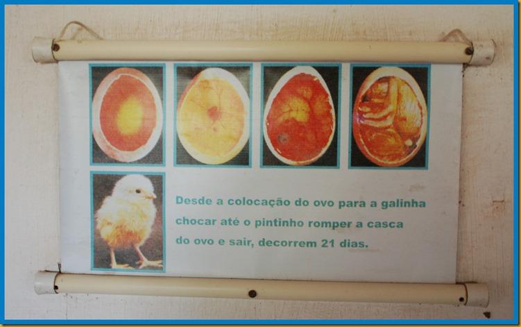 2012_04_25_Vira_Virou_Fazendinha_Seleção_0123