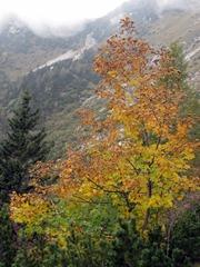 Drevo ob poti v jesenskih barvah