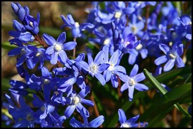 LI-flowers-005b
