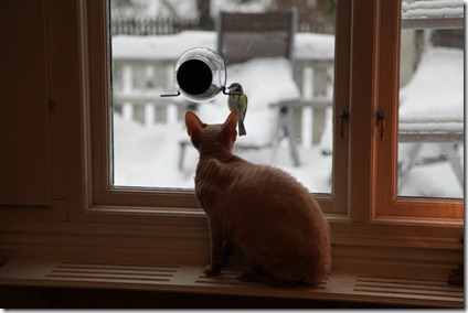 Katt-TV